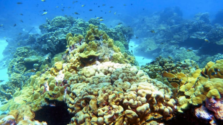 Is Climate Change Cooking Our Coral Reefs?