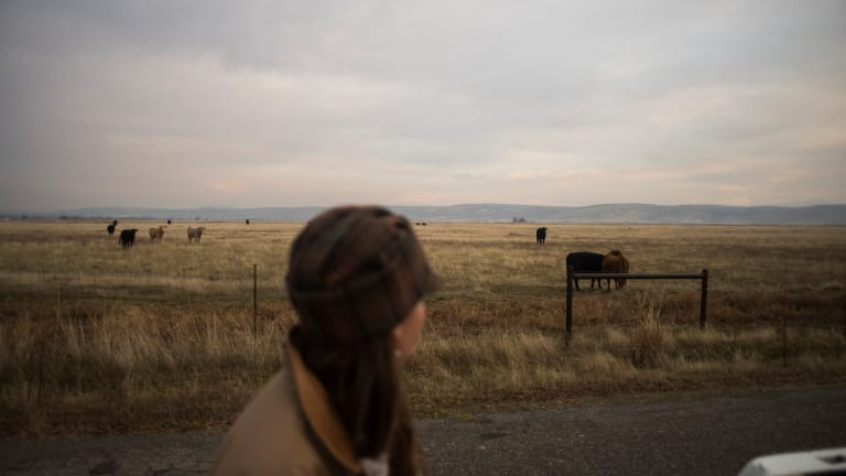 'It's Tough Sleeping at Night': Ranchers Seek to Protect Their Herds as the Wolves Move in