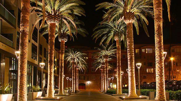 uplit-palms