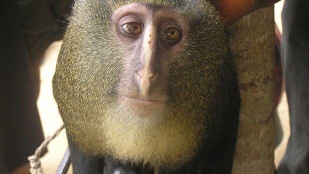 human-monkey-face