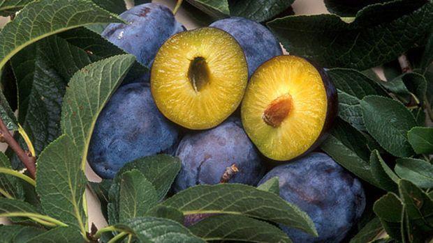 gmo-plums