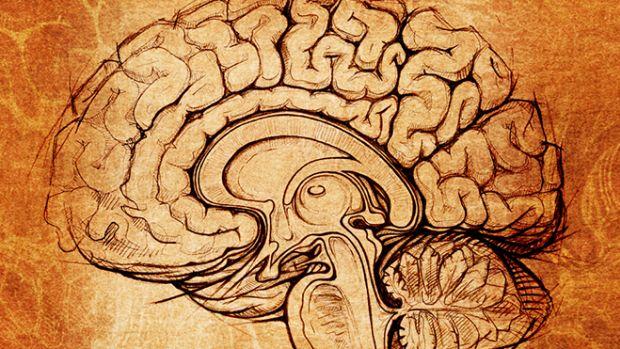 brain-sketch