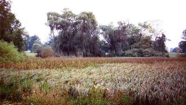 restored-grasslands