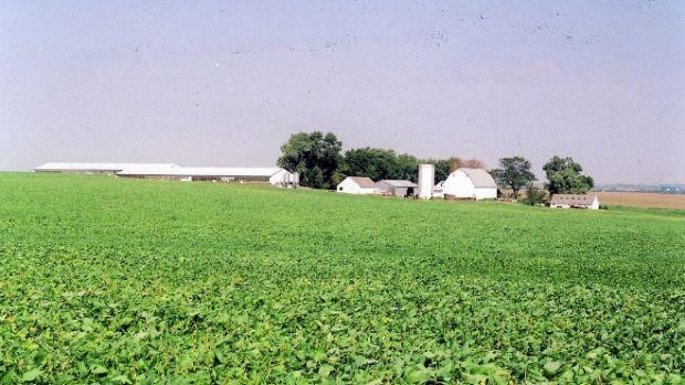 soybeans1.jpg