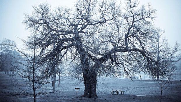 worst-tree