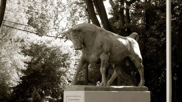 smithtown-bull