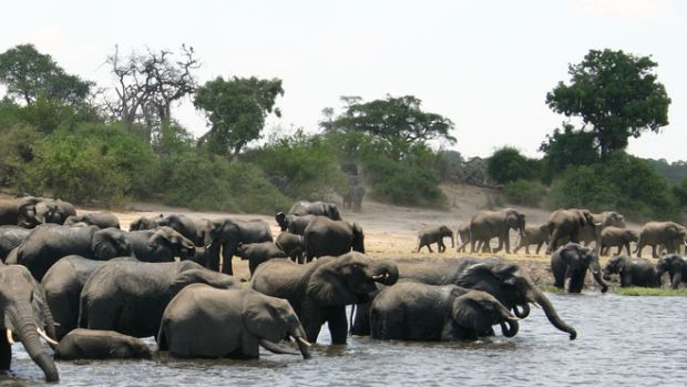 elephant-borders