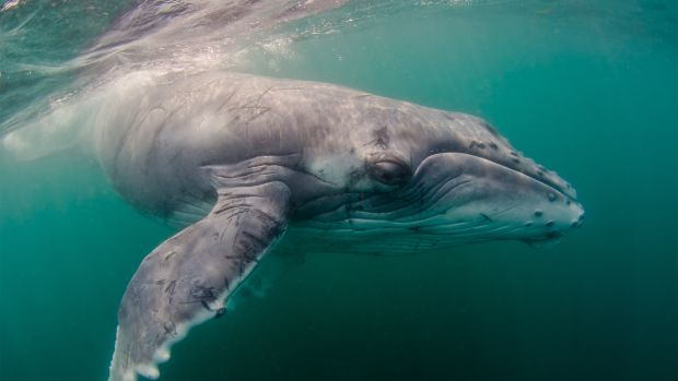 Baleen Whale.jpg