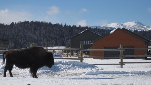 3-1-bison_fence_2.jpg