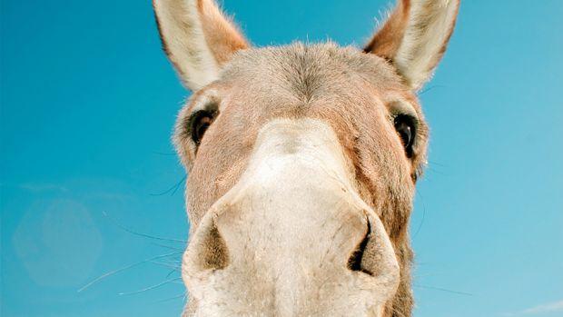 qs-donkey.jpg
