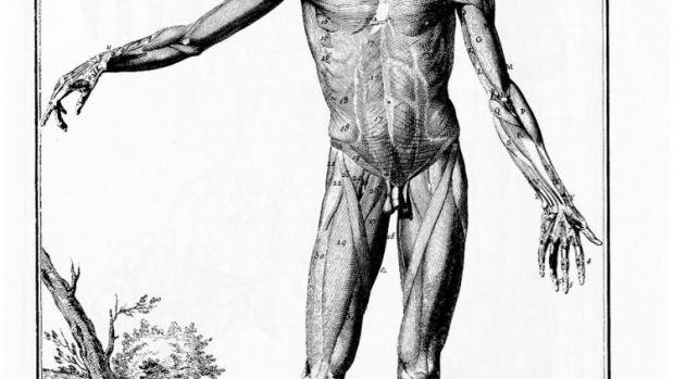 Encyclopédie_de_Diderot,_plate_1-143.jpg