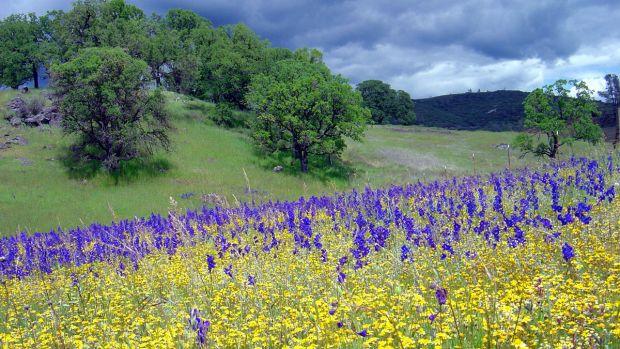 mclaughlin-reserve-flowers.jpg