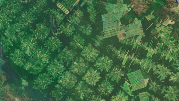 The Amazon rainforest, which saw a decrease in deforestation until recently, has seen a significant increase over the last two years, likely a result of pressures coming from land thieves and Brazilian agribusiness.