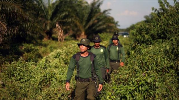 Indonesian forest rangers patrol the part of the Tripa peat swamp forest occupied by oil palm firm PT Kallista Alam in 2012.
