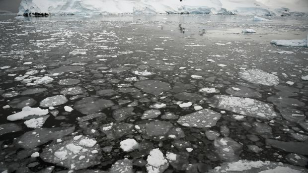 Ice floating on the sea in Antarctica.