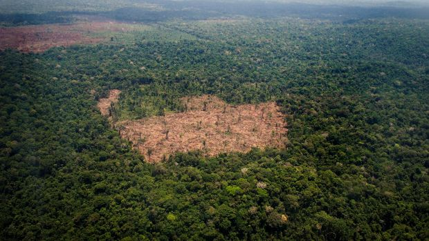 View of a deforested area in the middle of the Amazon jungle during an flight by Greenpeace activists over areas of illegal exploitation of timber.