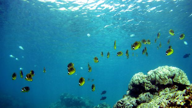 A school of fish pass over a coral reef at Hanauma Bay on January 15th, 2005, in Honolulu, Hawaii.