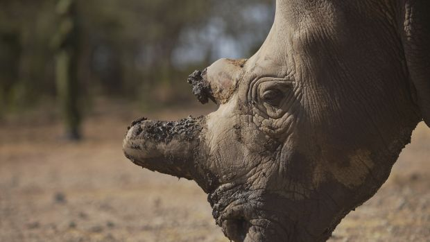 Rhino; Endangered Species; Conservation; Wildlife