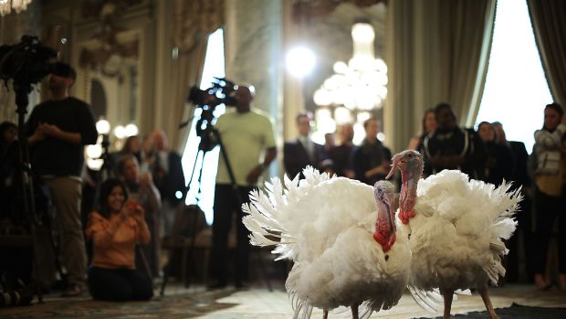 "Drumstick and Wishbone, the National Thanksgiving Turkey and its alternate ""wingman,"" meet the press ahead of their presidential pardon at an event in Washington, D.C. Both of the 20-week-old birds will then retire to their new home, Gobbler's Rest, at Virginia Tech."