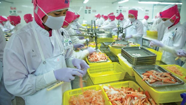 Burmese migrant workers peel shrimp at a processing factory in Thailand's Samut Sakhon province.