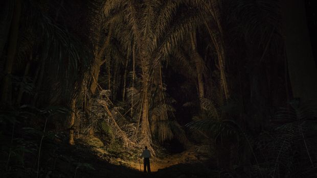 East Usambara Mountains, Tanzania: John Mganga walks through a forest at night near his former workplace, the Amani Hill Research Station. Many of the trees were first planted during German colonial rule as part of a botanical gardens project that was later abandoned.