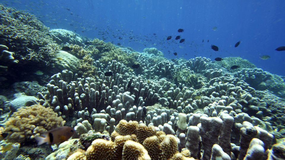 How Coral Bleaching Events Affect Ecological Diversity