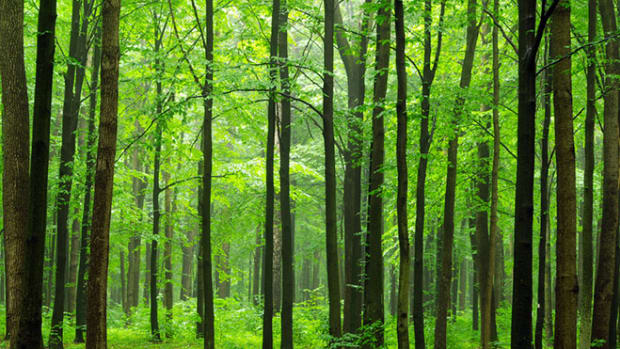 green-forest-path
