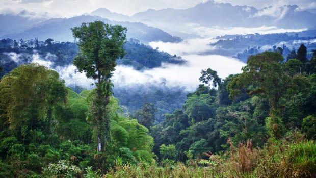Rainforest in Ecuador.jpg