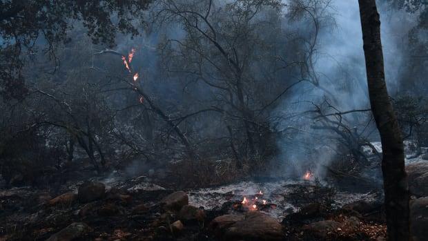 Trees burn in Toro Canyon, California, on December 12th, 2017.