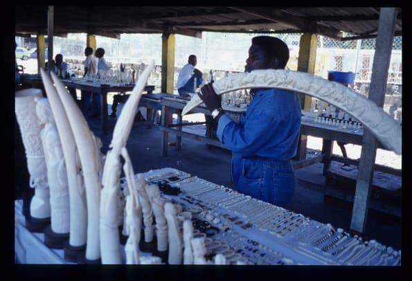 central-africa-ivory-market.jpg