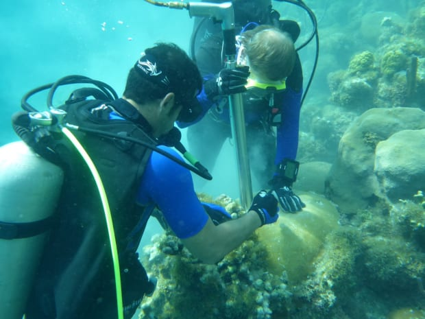 The Race to Save Cuba's Coral Reefs - Pacific Standard