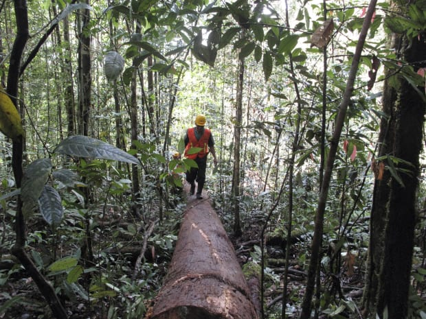 Timber Companies Have the Opportunity to Protect Forests Long-Term