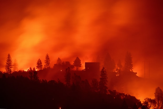 Climate Change Is Making It Harder for Forests to Recover From Wildfires