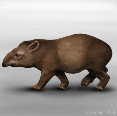 extinct-tapir-painting.jpg