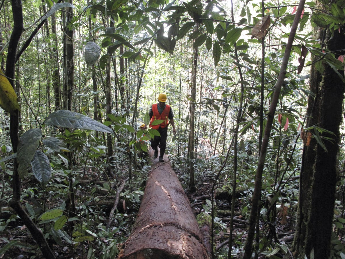 Timber Companies Have the Opportunity to Protect Forests Long Term