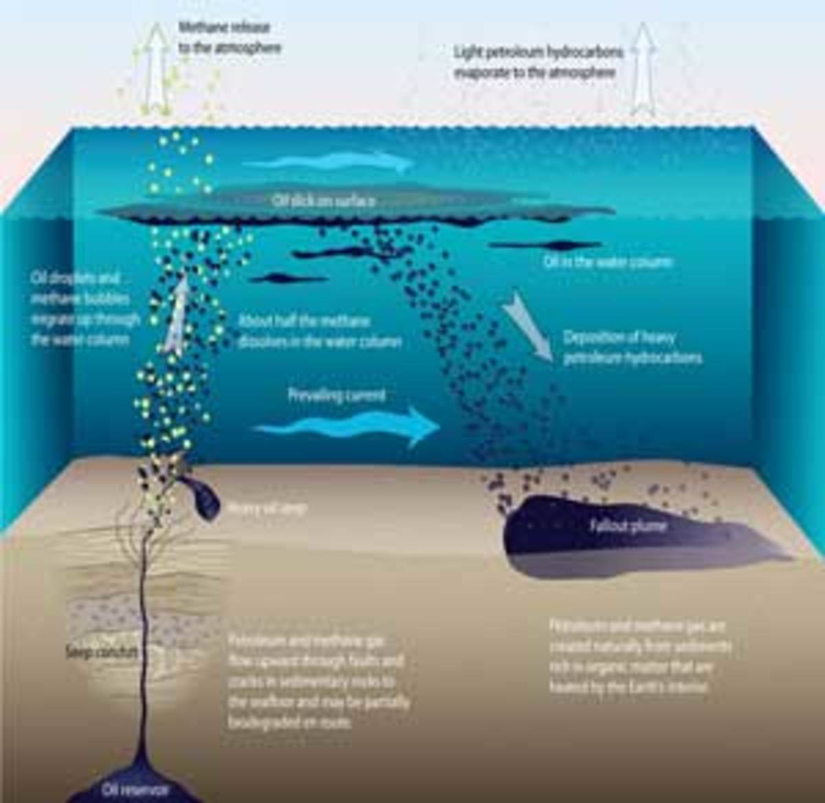 This illustration shows the route traveled by oil leaving the sub-seafloor reservoir as it travels through the water column to the surface and ultimately falls back to the seafloor. The oil remaining after weathering falls in a plume shape onto the seafloor where it remains in the sediment. Click to enlarge. (Jack Cook, Woods Hole Oceanographic Institution)