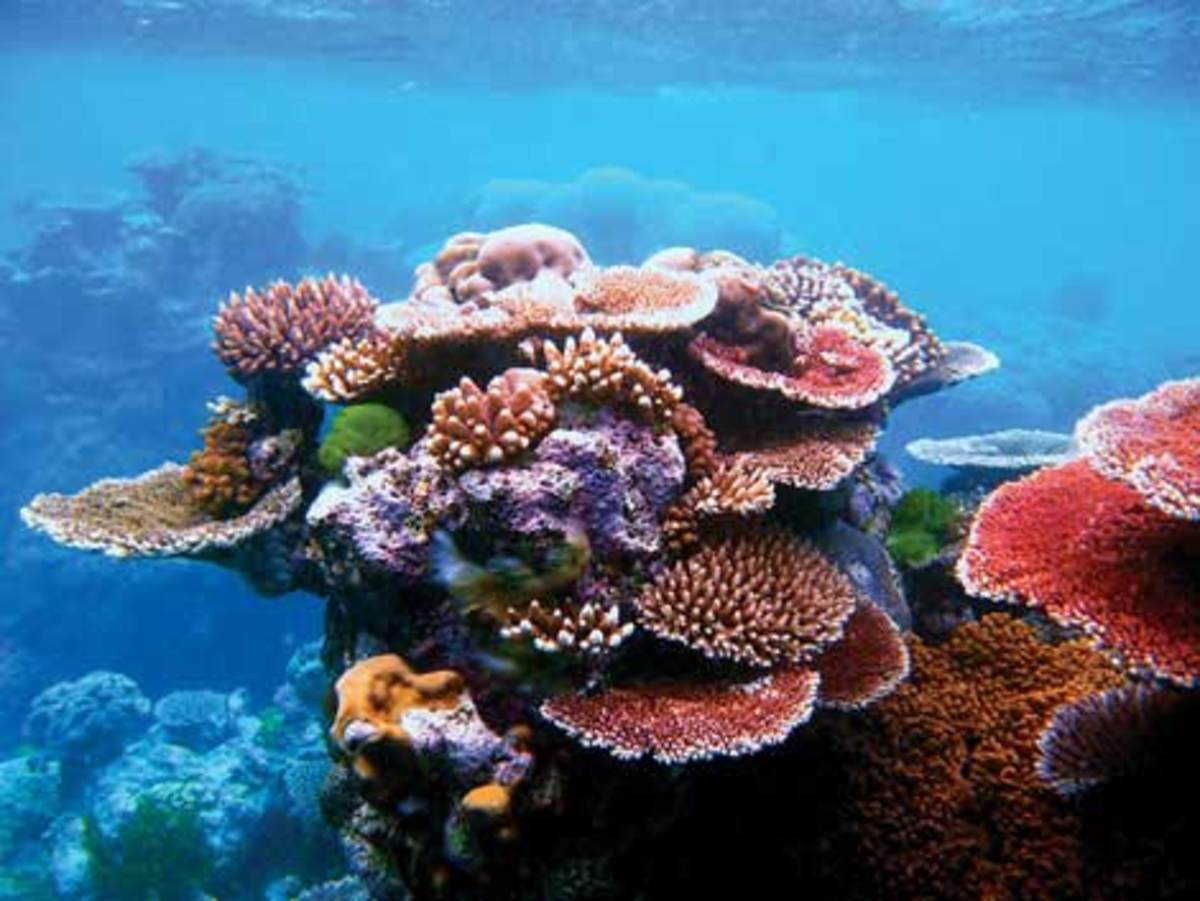 Ocean acidification will affect the growth of corals like these, an outcrop of Flynn Reef, a part of Australia's Great Barrier Reef. (wikimedia)