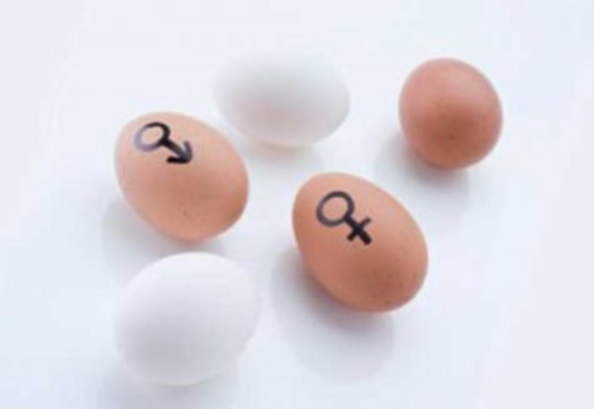 mmw-women-gaydar-fertility-300x207