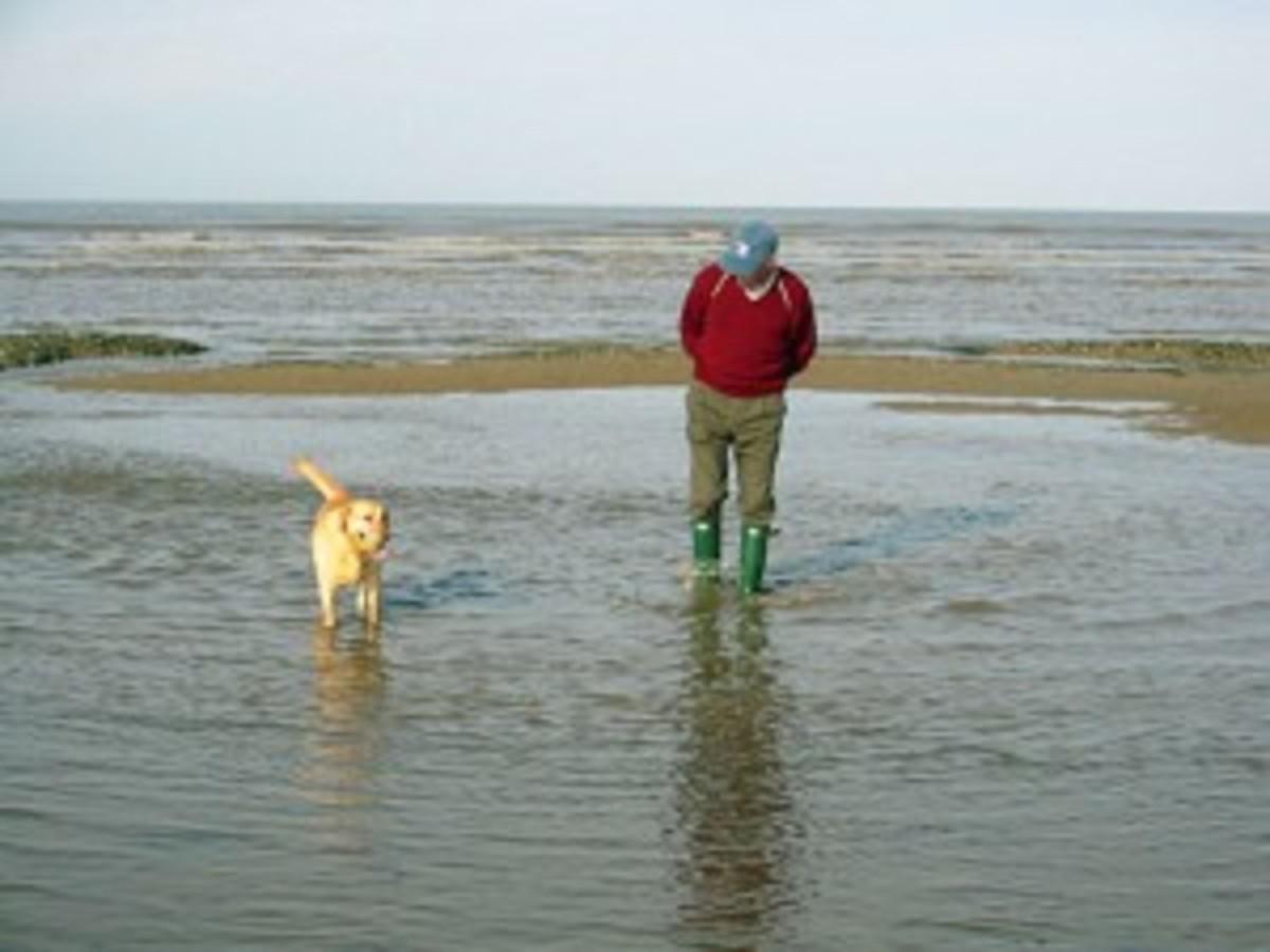 dog_paddle-300x225