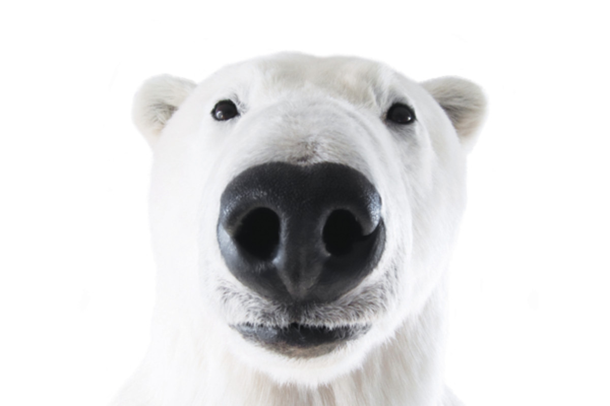 polarbearcentered