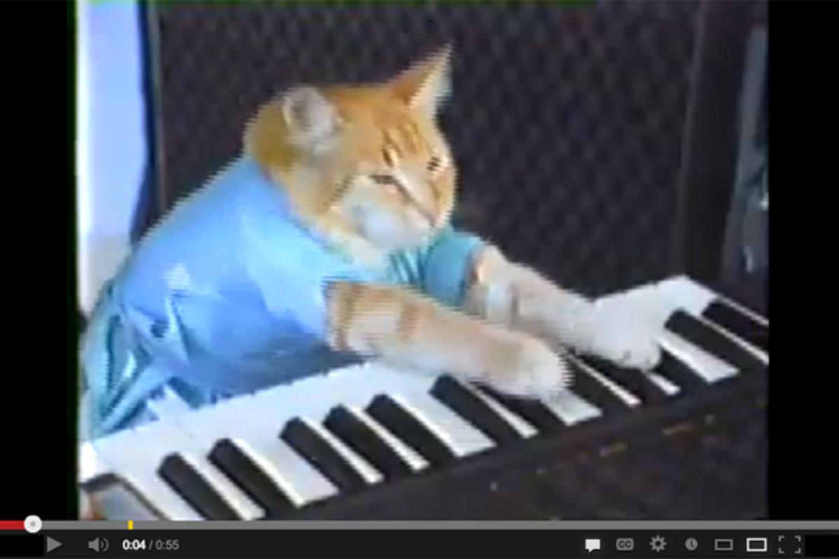 A still from Charlie Schmidt's Keyboard Cat, which, at last count, had been viewed nearly 30 million times since it was uploaded in 2007