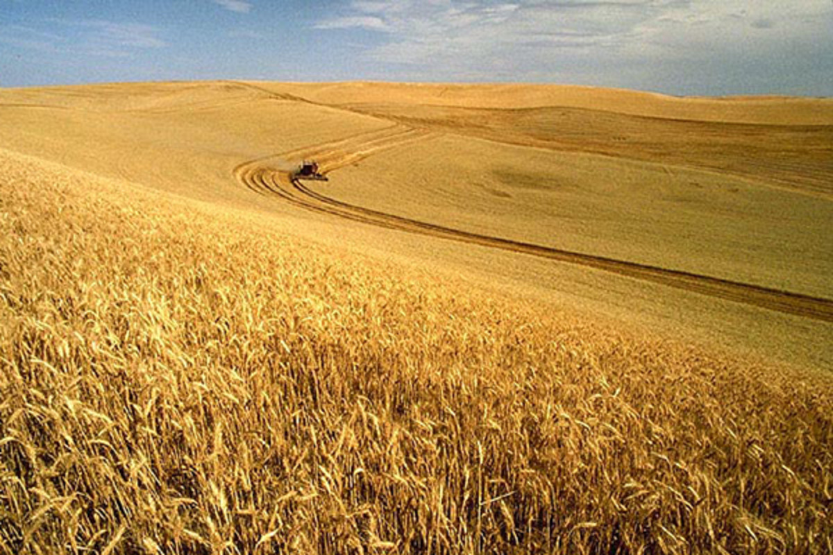 A wheat harvest in Idaho. (PHOTO: PUBLIC DOMAIN)