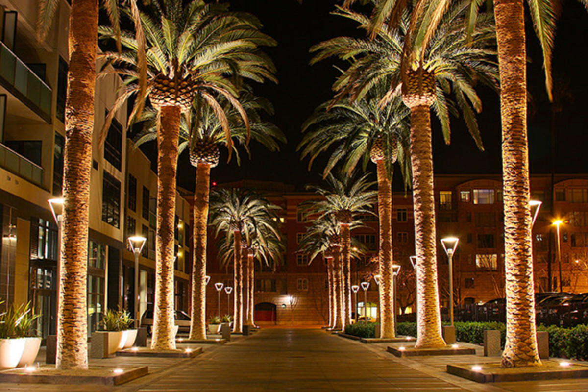 Downtown San Jose as seen with uplit palms. (PHOTO: MICHAEL/WIKIMEDIA COMMONS)
