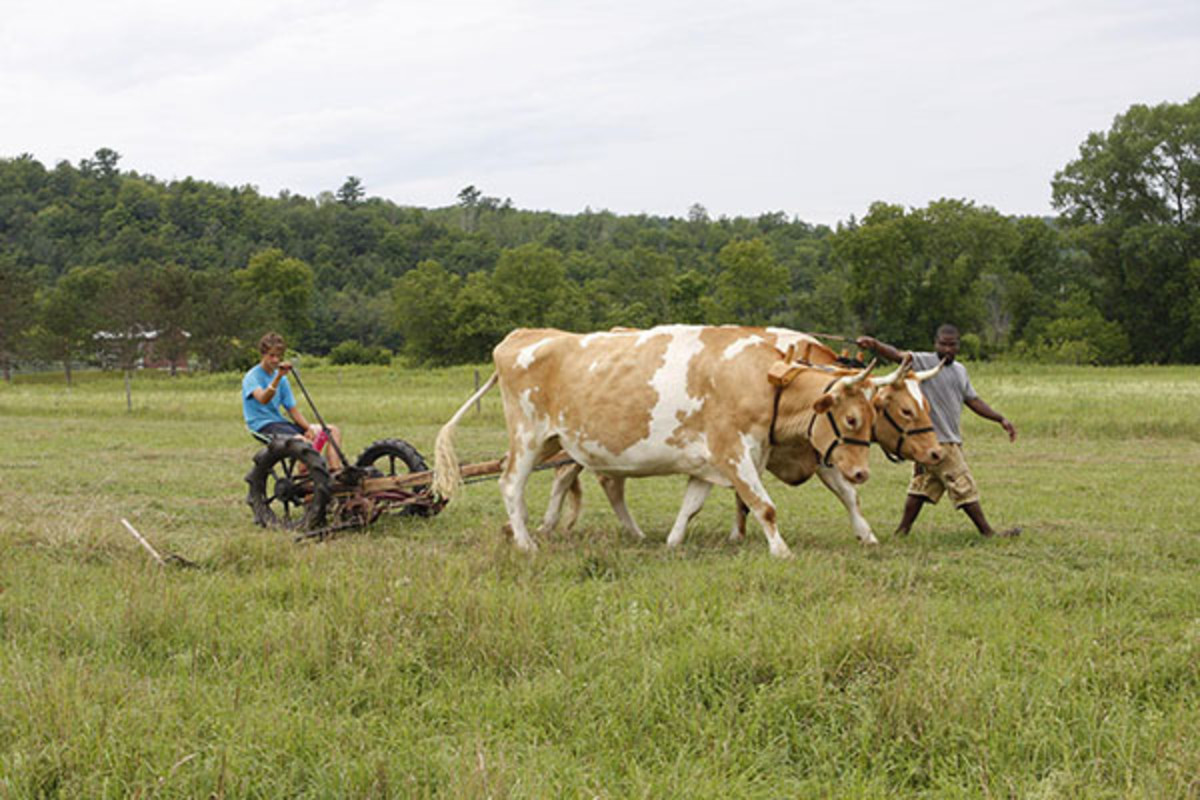 A Green Mountain College student guides oxen while another drives a cutting machine. (PHOTO: GREEN MOUNTAIN COLLEGE)
