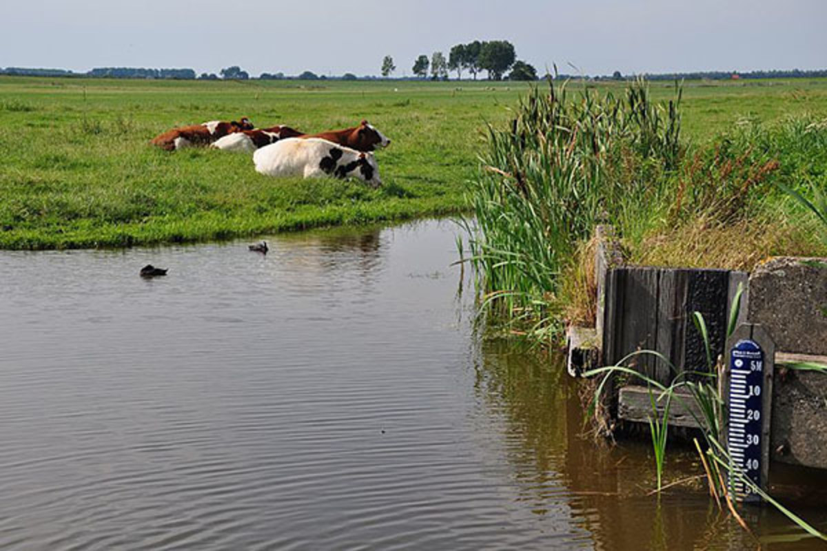 A polder in The Netherlands. (PHOTO: VINCENT VAN ZEIJST/WIKIMEDIA COMMONS)