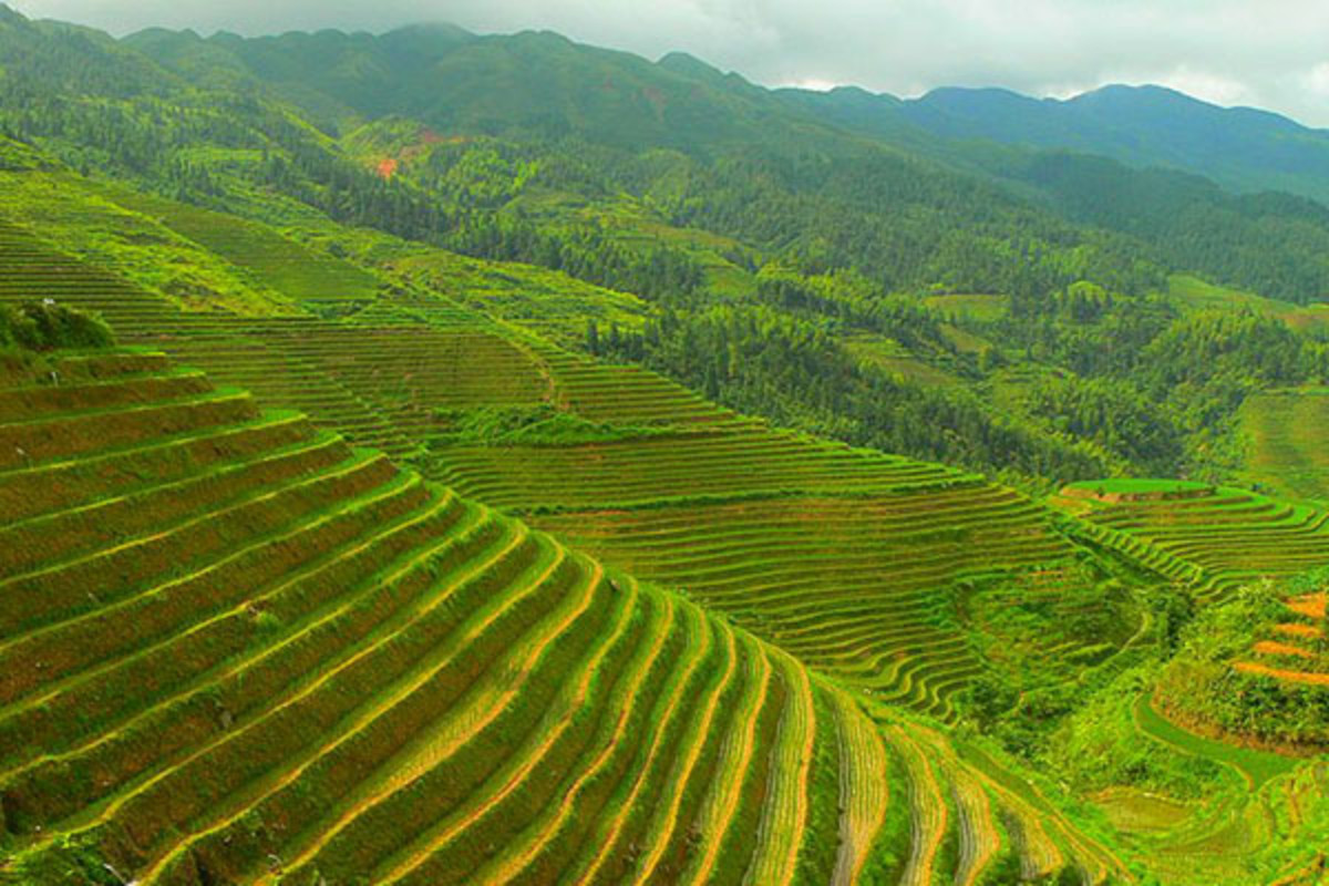 A Longji rice terrace in Longsheng county, Guilin, China. (PHOTO: PUBLIC DOMAIN)