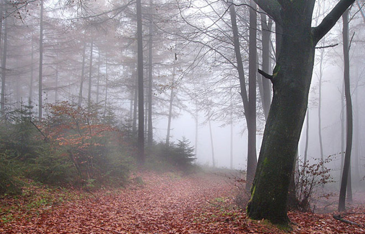 The Teutoburg Forest in northwestern Germany. (Photo: Nikater/Wikimedia Commons)