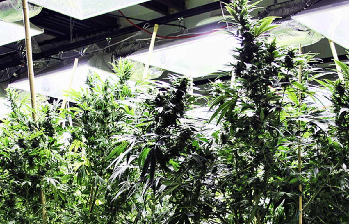 Inside a Denver-area grow house. (Photo: Coleen Danger/Flickr)