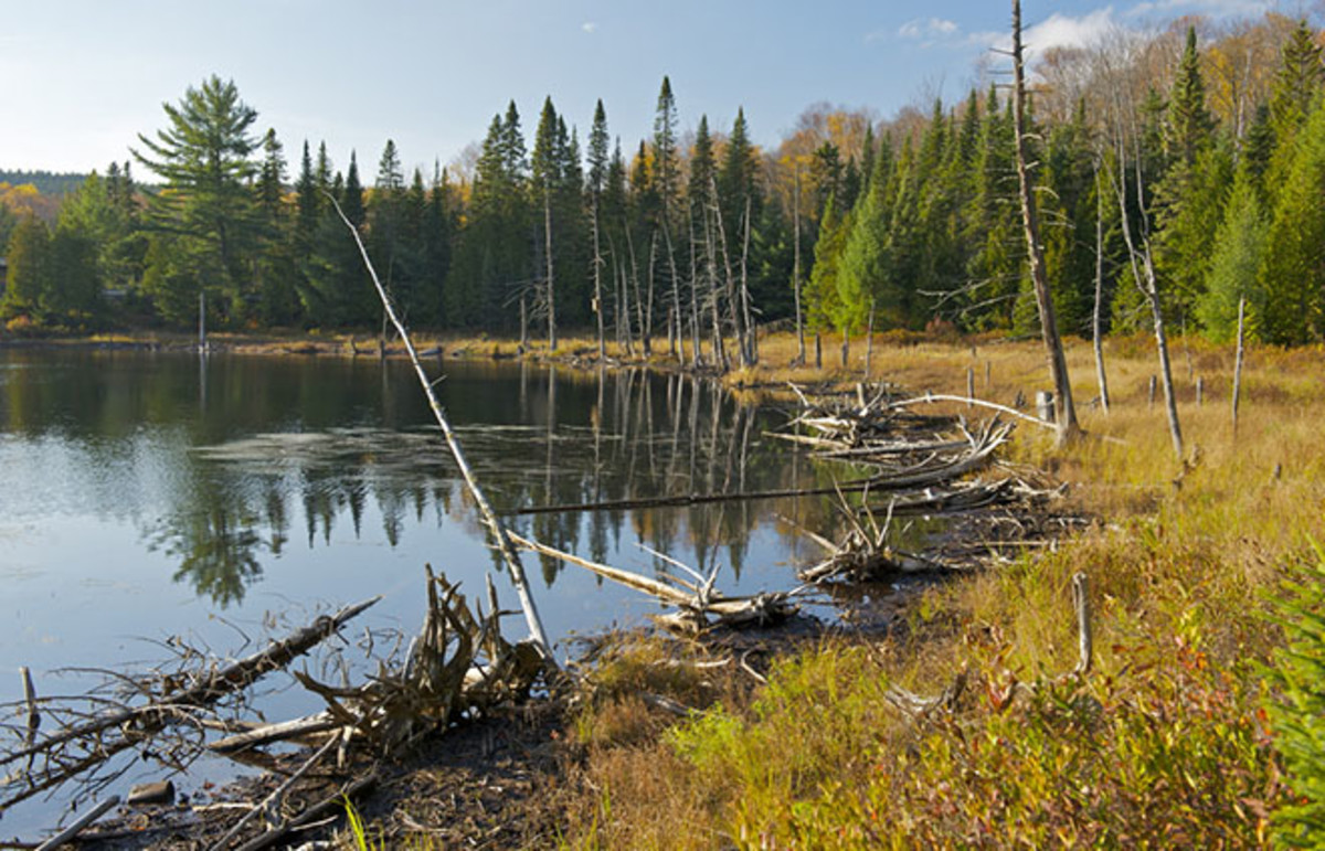 Wilderness in Mauricie National Park, Quebec, Canada. (Photo: Richard Cavalleri/Shutterstock)