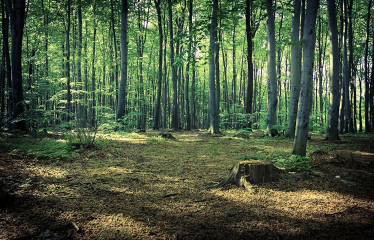 Forest near Rzeszow, Poland. (Photo: mffoto/Shutterstock)